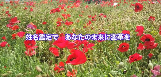 一光堂TOP2019年夏サイズ合わせ